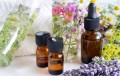 Essential Oils on a Budget Series: Exploring Rewards Programs to Get High Quality Essential Oils for Less