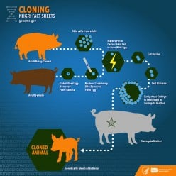 Cloning: Is it Ethical?