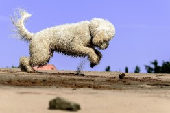 Best Summer Dog Walks That Benefit Your Dog's Socialization