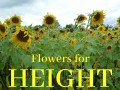 Great Flowers for Adding Height to Your Garden