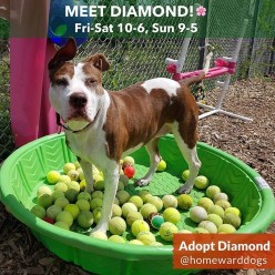 Help Find A Home for Diamond