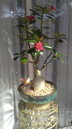The Desert Rose and Me: The perfect Love Affair