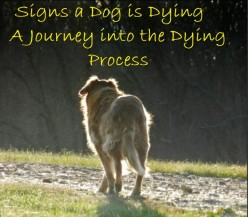 Signs a Dog Is Dying: What to Expect When Your Dog's Health Declines