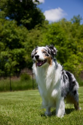 Use GPS technology to find your lost dog!