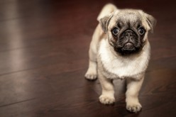 The Easy Way to Potty Train a New Dog