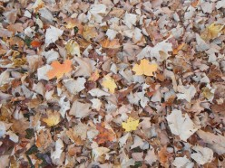 Memory Making Activities to Do With Your Child in Fall
