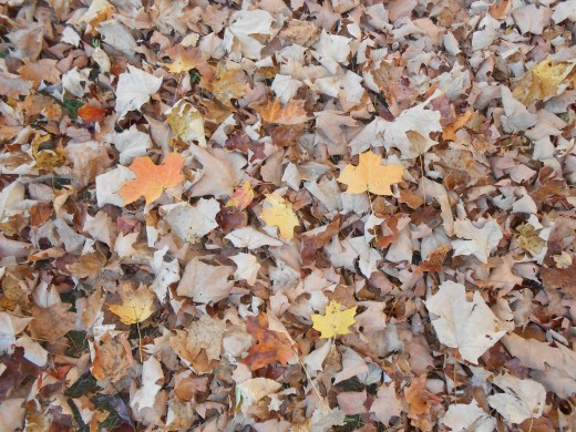 Jumping in Fall leaves is a wonderful activity to do with children.
