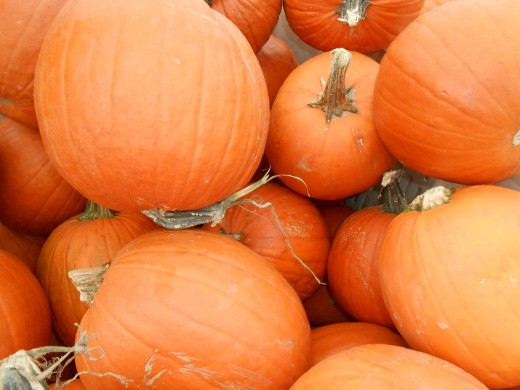 Pumpkin picking at a local pumpkin farm is a big treat for families in the Fall.