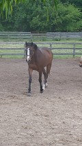 The Benefits of Using a Rehab or Lay up Facility for Your Injured Horse