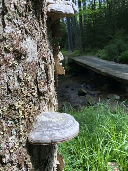 The fungi kingdom is more closely related to the animal kingdom than the plant kingdom.