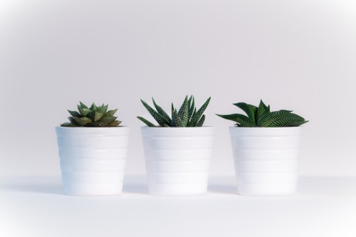 Plants can help clean up the air in your home or office.