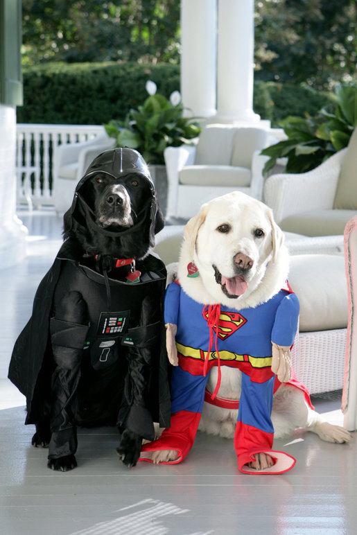 Two Halloween dogs dressed as Darth Vader and Superman, photo by Zachary