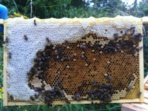 White areas: Honey | Yellow with caps: Brood | Yellow/Orange: Pollen