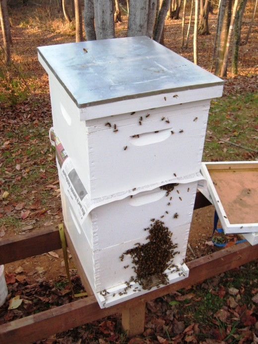 Newspaper between the hives to let them get used to each other.
