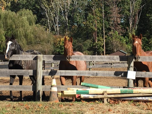 Horses, just like us, thrive on routine. Just like these guys waiting  by the fence at feeding time.