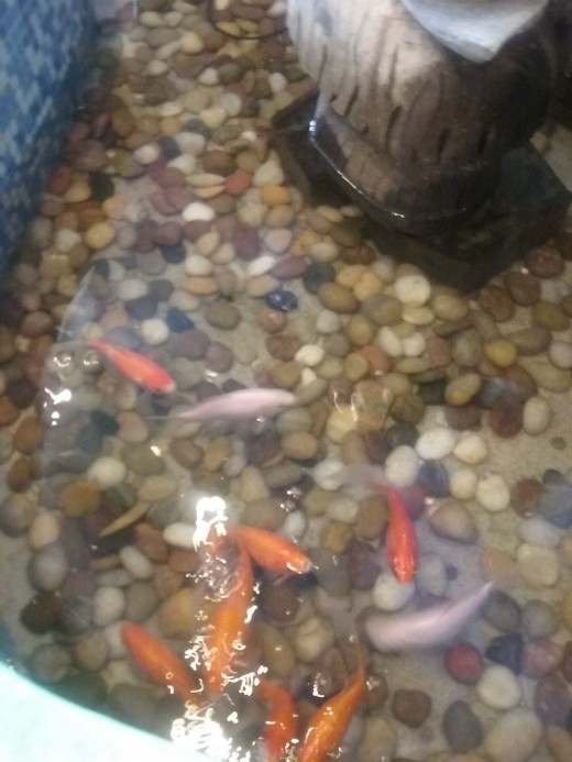 fish at Ichiban Grill Restaurant