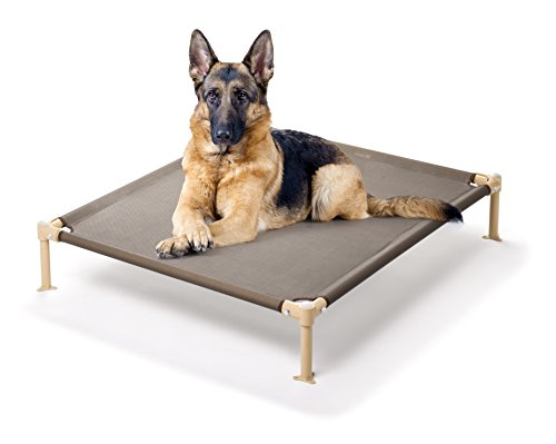 Raised Dog Bed/Cot
