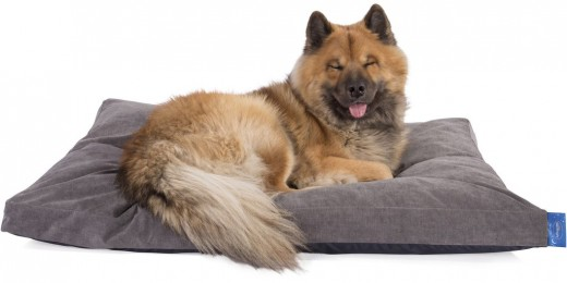 Cushion/Pillow Dog Bed