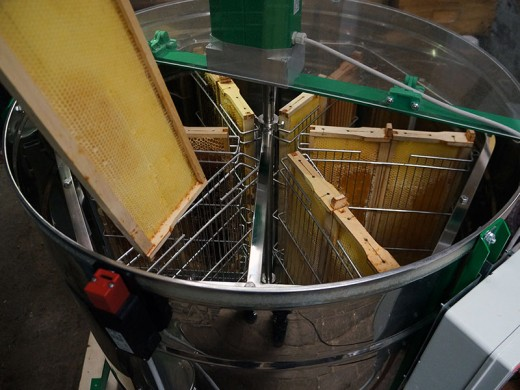 Extracting honey from the frame