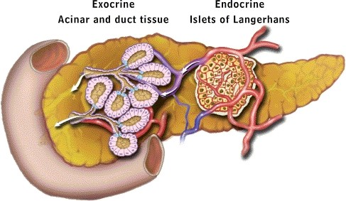 Pancrease Model