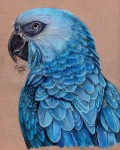 Spix's Macaws Are Now Extinct out in the Wild, What Now?