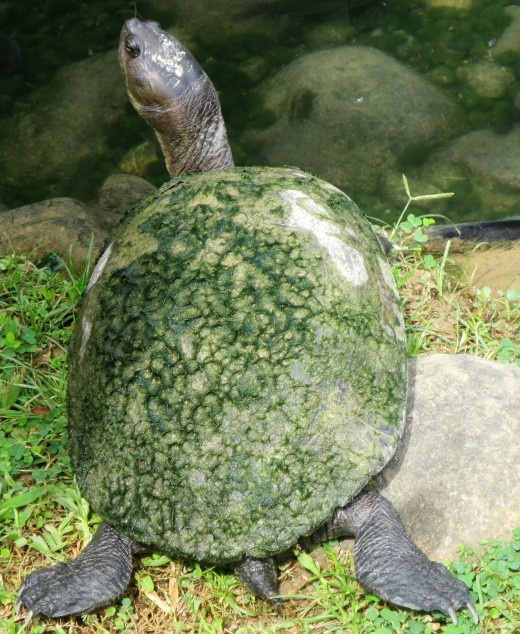 Caring for pet turtles