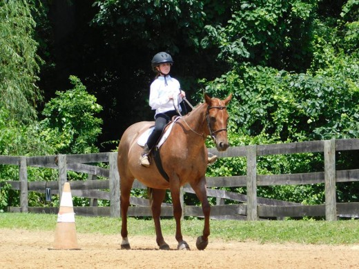 Molly in one of our on farm shows.