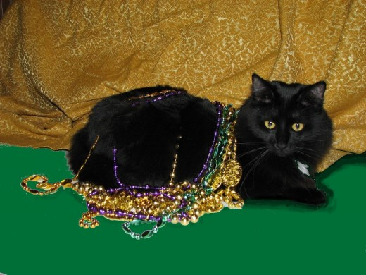 Star enjoys shiny beads and posing for the camera.