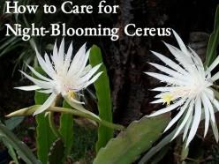 How to Grow Night-Blooming Cereus