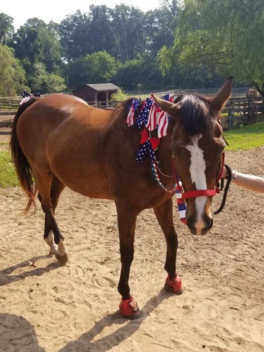 Finnigan looking patriotic!