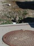 Burrowing Owl of The Big City Airport - Suburban Birding with Mel
