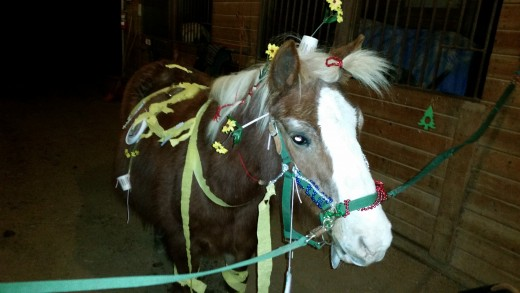 P is for pony. This is Huey the most amazing pony in the history of the world, may he rest in peace.