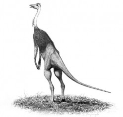 Facts on The Struthiomimus & Lesothosaurus