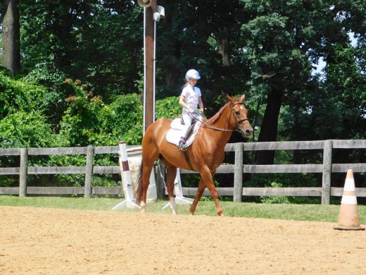 Same horse as above. Different rider. Hands too low and too far back. Reins too long with not enough contact to be effective. Good thing it is Marley and he is a trustworthy boy!