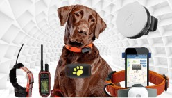 11 Tips for Choosing the Best GPS Dog Tracking Collar