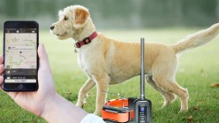 11 Best GPS Trackers and Collars For Dogs