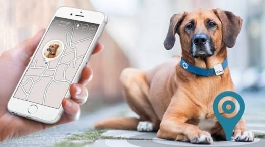 Pebbel GPS locator, Dog collar