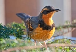 Protect Migrating Birds with Lights Out