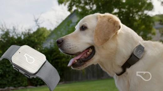 Whistle GPS Dog Collar