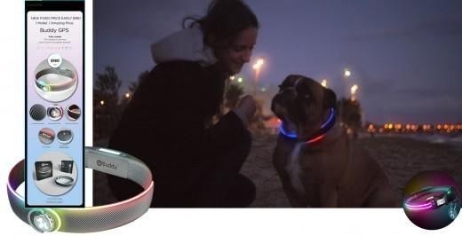The Buddy smart dog collar