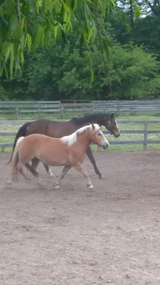 Dunkin was so happy the day this picture was taken, his friend Finn had just got home from the horse hospital.
