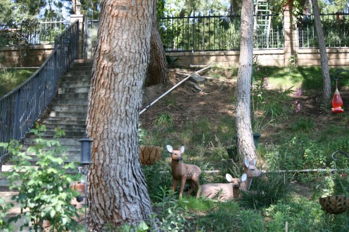 No Longer will our backyard be a typical Los Angeles County backyard!   We are a Nationally Certified Wildlife Habitat.