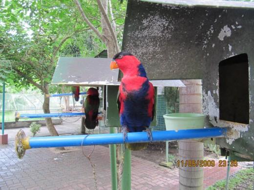 One of the birds featured in Davao's Crocodile Farm