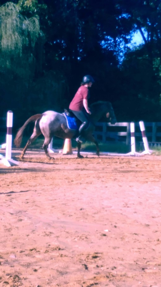 Tammy can even pop over little jumps, and canter on both leads!