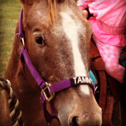 Cute little picture of Tammy with her name on her nose, out at a job giving rides!