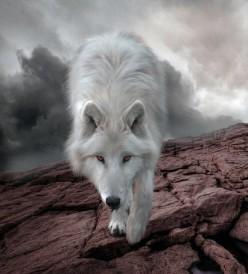 She-Wolf Fooled Ya, Song Writing