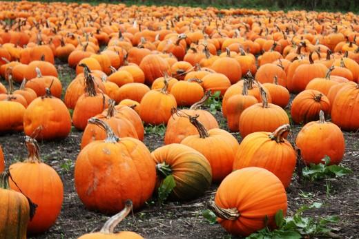 Pumpkins:  An essential item for Halloween.