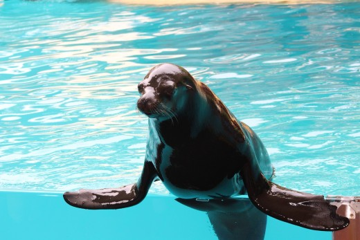 Naked sea lion