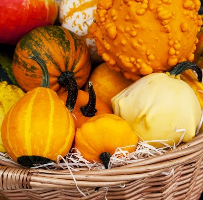 Fall Harvest in a Basket