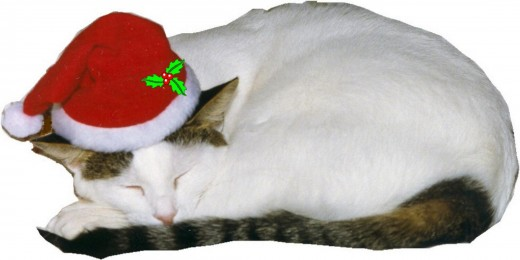... all through the house, not a creature was stirring...